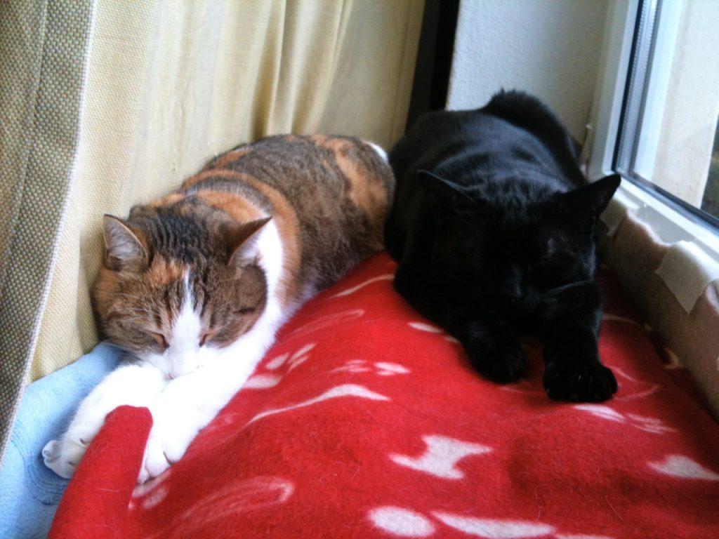 Emmi und Emilio, die zwei Katzen der Textmechanikerin
