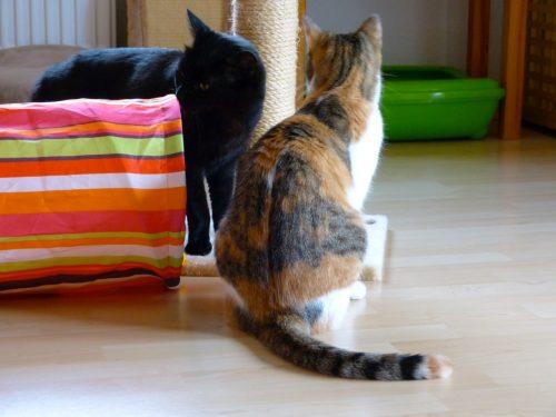 Emmi und Emilio erkunden ihre neue Umgebung